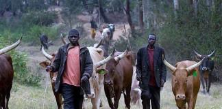 Miyetti Allah blames herdsmen crisis on porous borders