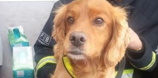CIA sacks bomb-sniffing dog, Lulu