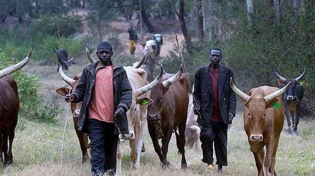 Taraba: Suspected herdsmen raid village, kill monarch