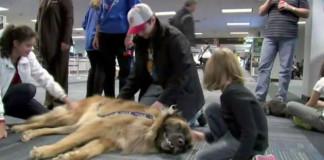 Dog diverts United Airlines plane
