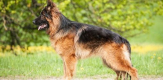 Mother, son killed by own dog