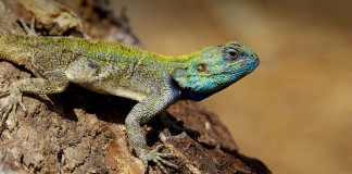 Drug Abuse: Nigerians now sniff Lizard excrement- Health Minister