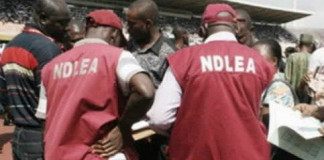 Kano NDLEA Dislodges 45 Drugs Joints, Arrests 250 Addicts