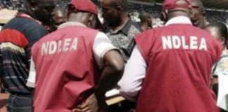 NDLEA Arrests Drug Kingpin with 149 Kilograms of Marijuana in Kebbi