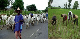 Herders-Farmers Conflict: FG Urged to Establish North-Central Dev. Commission