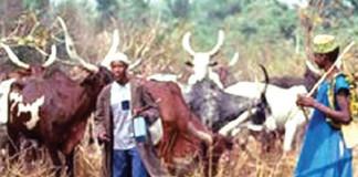 JUST IN: Village Near Jalingo Attacked by Herdsmen