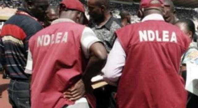NDLEA Arrests 59 Drug Dealers in Kebbi