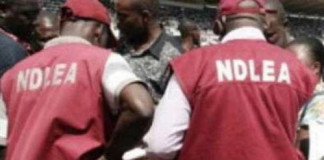 NDLEA Arrests 177 Suspects, Secures 49 Convictions in Plateau