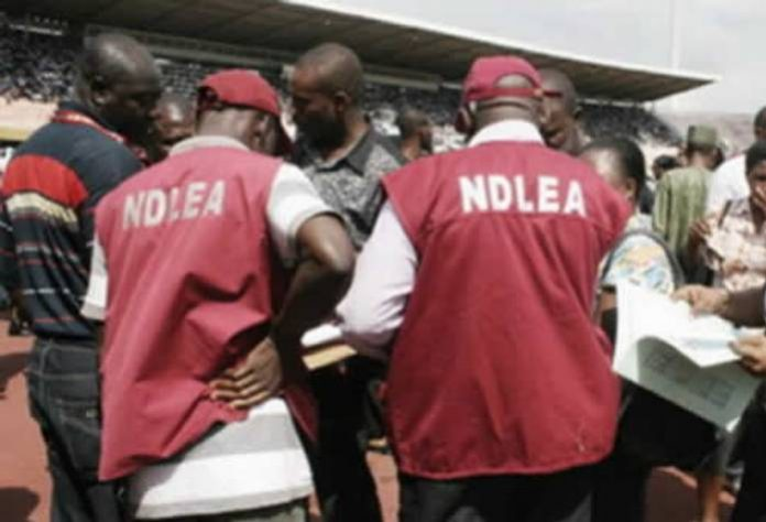 Buhari Approves Recruitment of 5,000 Personnel for NDLEA