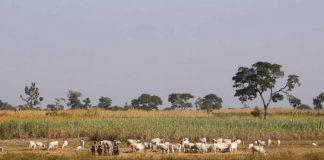 Boko Haram Insurgents Kill 19 Cattle Fulani Herders - Sources