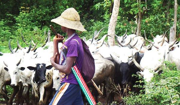 Anti-grazing Law: Herdsmen Sue Oyo Govt, Ask For N100,000 Damages