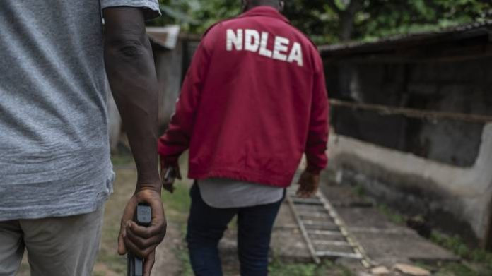 NDLEA Seizes 225.32kg Exhibits, Arrests 146 Suspects, In Imo