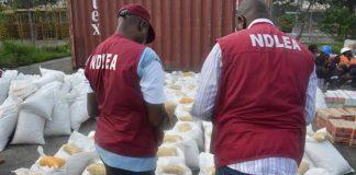NDLEA Destroys 16, 146 kg Of Illicit Drugs In Bauchi