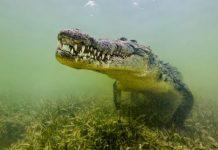 Coronavirus: Man killed, Eaten By Crocodile After defying6 COVID-19 Lockdown Measures