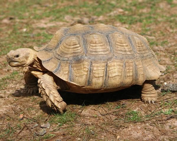 Five-month-old Baby Dies After Drinking Turtle Blood To Prevent COVID-19
