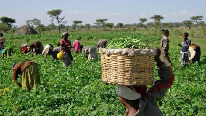 Stakeholders Task FG To Seek Demand-Driven Agriculture