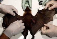 Coronavirus: Fear Over Rise In Animal-to-Human Diseases