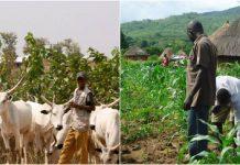 herders/farmers